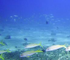 duiken Cyprus